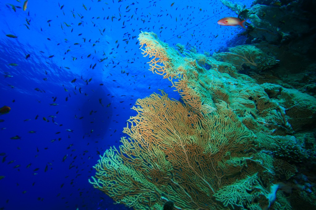 Photo from when I went diving in Egypt's Red Sea