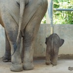 Ethical Elephant Tourism at Elephant Nature Park: An Unforgettable Dream Come True