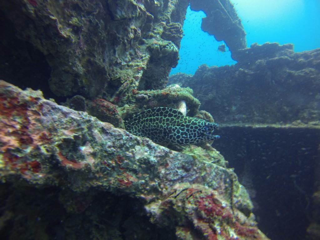 Honeycomb moral eel!