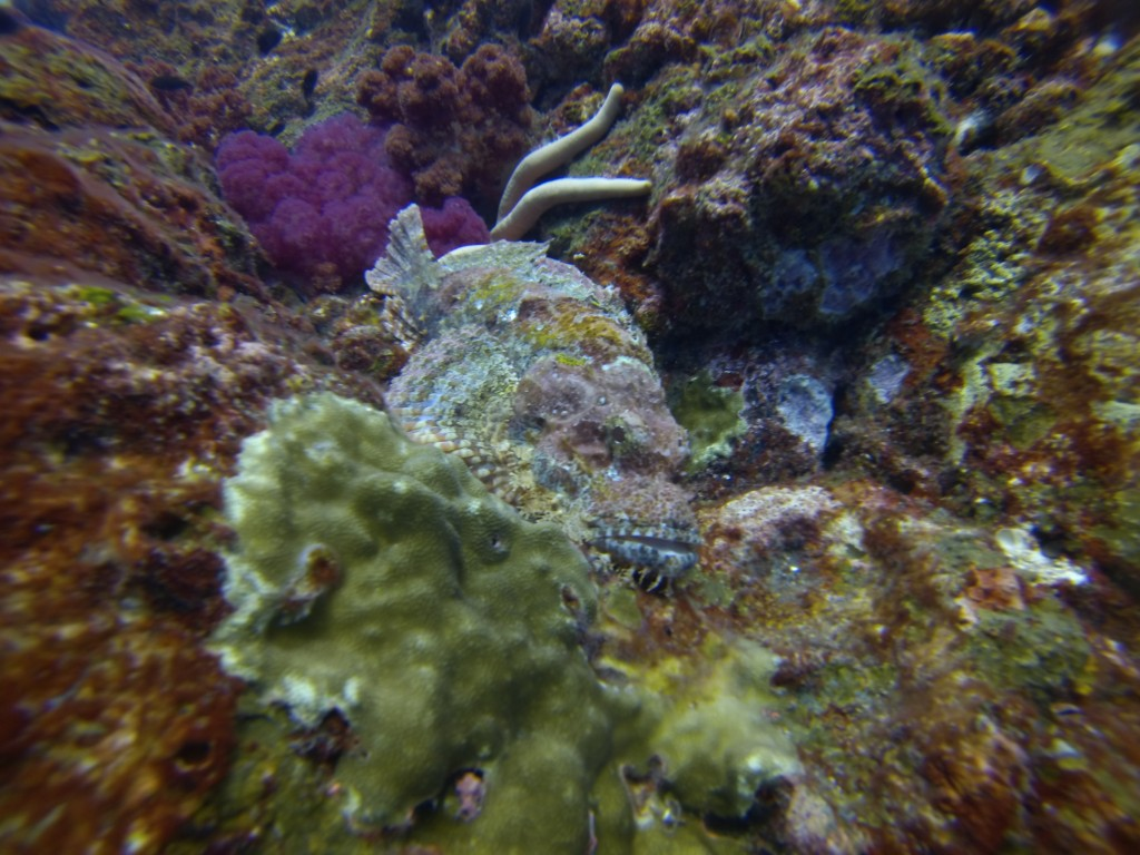A pretty ugly scorpion fish!