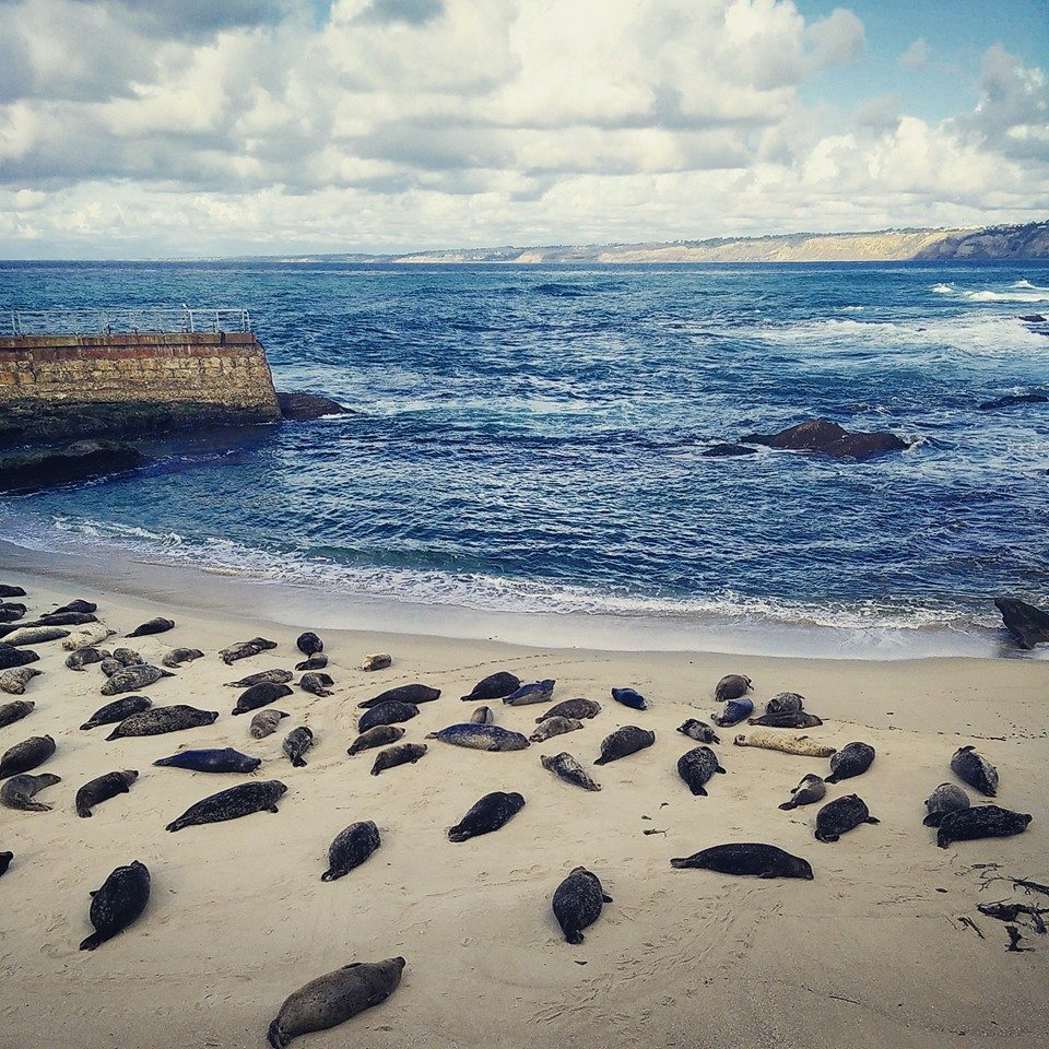 Seal Cove in La Jolla, San Diego