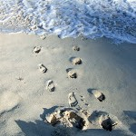 Earth Day Tip #2: Calculate Your Footprint