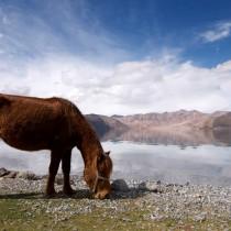 Stunning scenery in Ladakh, India.